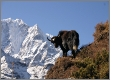 Everest Base Camp - Trekkingreise Khumbu, Nepal
